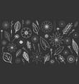 botanical hand-drawn set on black chalk board vector image vector image
