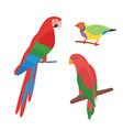 cartoon tropical parrot wild animal bird vector image vector image