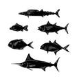sketch of sea fish vector image vector image