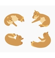 Isometric red lying cat vector image