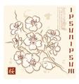 Japan Cherry Blossom vector image