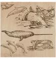 cetaceans cetacea - an hand drawn pack vector image