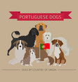 dogs by country of origin portuguese dog breeds vector image vector image