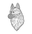 muzzled dog shepherd sketch vector image vector image
