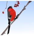 The one bullfinch vector image