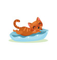 funny kitten lying on a pillow mischievous cute vector image