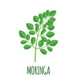 moringa icon in flat style isolated on white vector image vector image