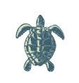 sea turtle top view scratchboard vector image vector image