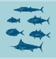 sketcg of sea fish blue color vector image