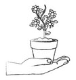 hand with flower in pot icon vector image vector image