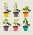 herb garden with pots of herbs set 3 vector image vector image