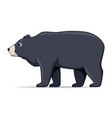 himalayan bear animal standing on a white vector image