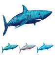 polygonal shark in four vector image vector image