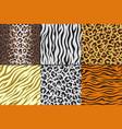 seamless animal prints leopard tiger zebra skin vector image vector image