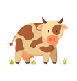 spotted cow farm animal cartoon depiction poster vector image