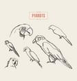 set realistic parrots hand drawn sketch vector image
