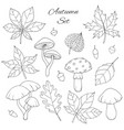 autumn set with oak poplar leaves mushroom acorn vector image vector image