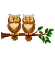 Cartoon couple owl on a branch vector image vector image