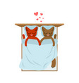 cat lovers in bed lover in bedroom pet romantic vector image