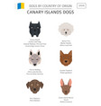 dogs by country of origin spain canary islands vector image vector image