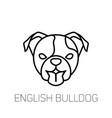 english bulldog tongue out dog breed linear icon vector image vector image