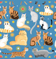 graphic pattern different breeds cats vector image vector image