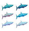 polygonal shark in six colour vector image