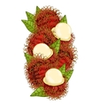 Rambutan isolated composition vector image vector image
