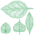 set detailed green leaves vector image vector image