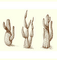 cactus set hand drawing vector image