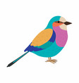 lilac breasted roller colorful beautiful bird vector image vector image