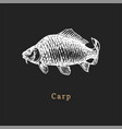 carp on black background fish vector image vector image