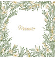 frame made rosemary drawn with contour lines on vector image