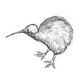kiwi bird symbol of new zealand vector image