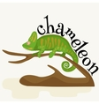 pet chameleon for home lizard and reptile vector image