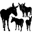 set donkeys silhouettes vector image