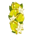 Star Fruit isolated composition vector image vector image