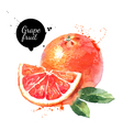 Watercolor hand drawn pink grapefruits Isolated vector image