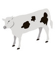calf young of domestic cattle vector image