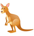cute kangaroo on white vector image vector image