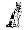 german shepherd dog sitting pose- isolated vector image vector image