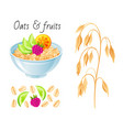 oat meal fruit berry set bowl oatmeal ear flake vector image vector image