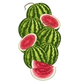 Watermelon isolated composition vector image vector image
