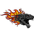 a head of the dragon in fire with flames vector image vector image