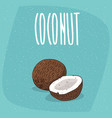 isolated ripe coconut fruits whole and piece vector image