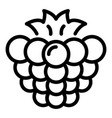 natural blackberry icon outline style vector image vector image
