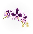 spots orchid branch flowers purple and white vector image vector image