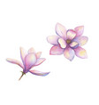 watercolor beautiful magnolia flowers set isolated vector image vector image