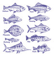 hand drawn fishes ocean sea river fishes sketch vector image vector image