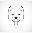portrait of cute chow-chow isolated vector image vector image